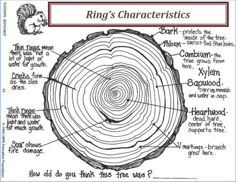 Image Result For Trunk Cross Section Tree Rings Growing