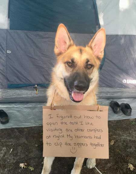 21 Outrageous Pictures Of Dog Shaming Funny Hilarious Stuff Dog