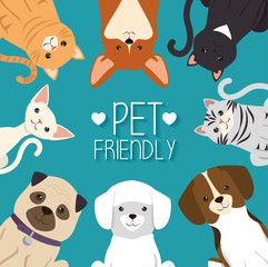 Dogs And Cats Pets Friendly Vector Illustration Design Dog Cat