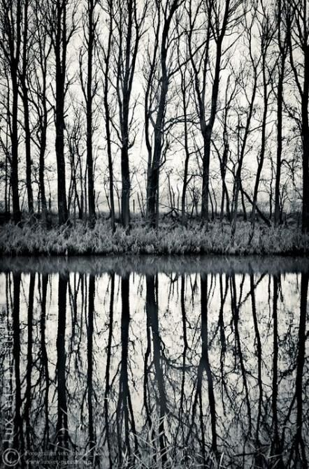 Simple Nature Photography Trees Serenity 48 Ideas Photography Nature Woods Photography