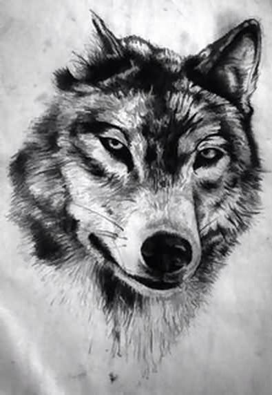 Tattoo Symbols And What They Mean Desenho De Lobos Desenho De