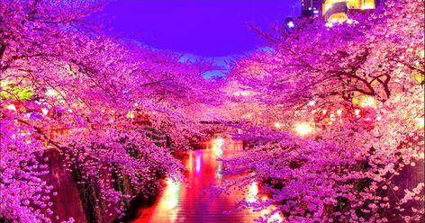 34 Foto Pemandangan Alam Terindah Di Jepang Di 2020 Pemandangan Bunga Sakura Mekar