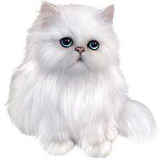 https://i.pinimg.com/474x/a3/3e/68/a33e682753cbdde2de0c30364f398c1e--cat-clipart-white-persian-cats.jpg