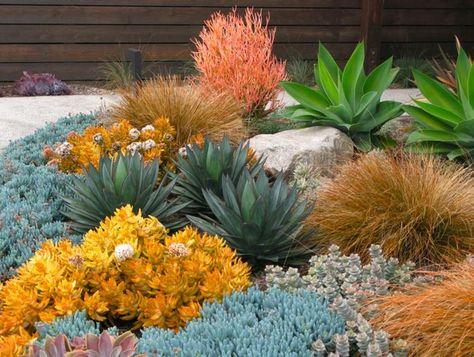 List Of Pinterest Dagave Garden Ideas Pictures Pinterest Dagave