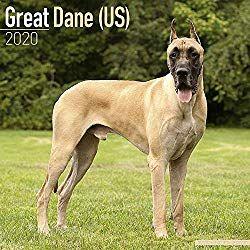 Great Dane Us Calendar Dog Breed Calendars 2019 2020 Wall