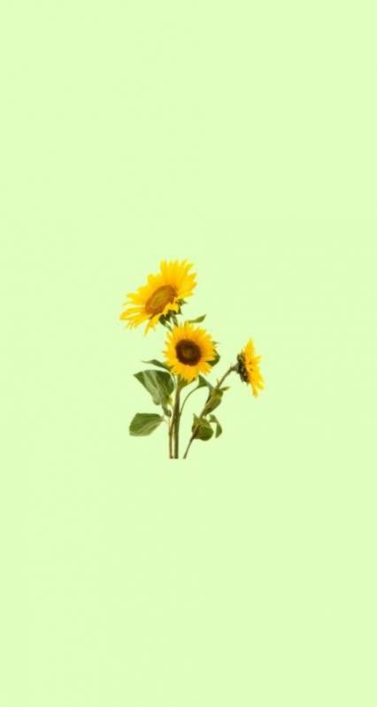 60 Trendy Wall Paper Quotes Yellow Apple Watch Sunflower Wallpaper Wallpaper Backgrounds Sunflower Iphone Wallpaper