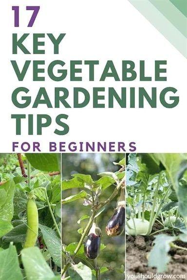 Organic Gardening Jobs Devon Planning An Organic Garden For