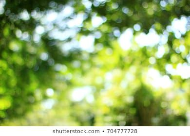 Stock Photo Nature Backgrounds Blurred Background Photography Photo Background Images