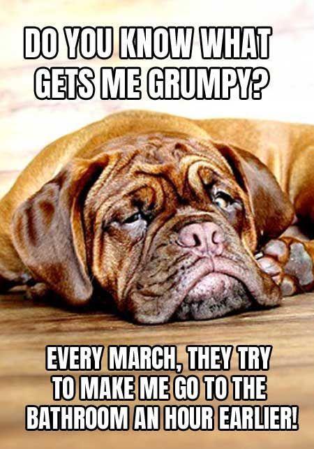 Grumpy Dog Meme Mad About Daylight Savings Time Dog Dogmemes Funny Barkinglaughs Funnydogmeme Cute Dog Memes Grumpy Dog Daylight Savings Time