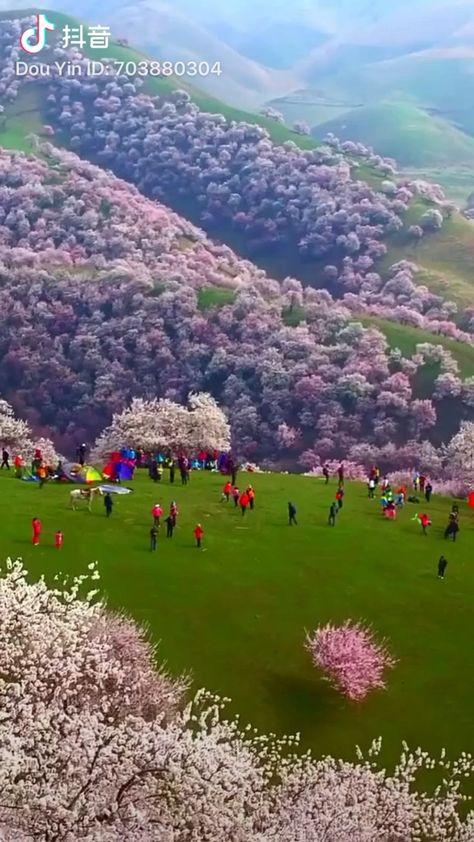 #travel #bucketlist #spring #flowers