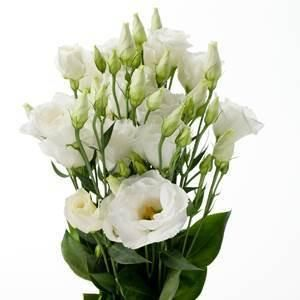 White Lisianthus Flowers 100 Stems Wholesale Flowers Jr Roses In 2020 Lisianthus Flowers Bulk Roses Bulk Flowers Online