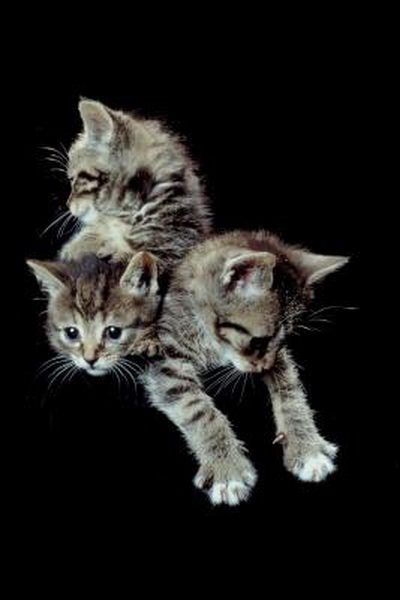 As With Most Species Mother Knows Best And Cats Are No Different Mother Cats Will Start The Weaning Process By Nudging B Newborn Kittens Kittens Kitten Care