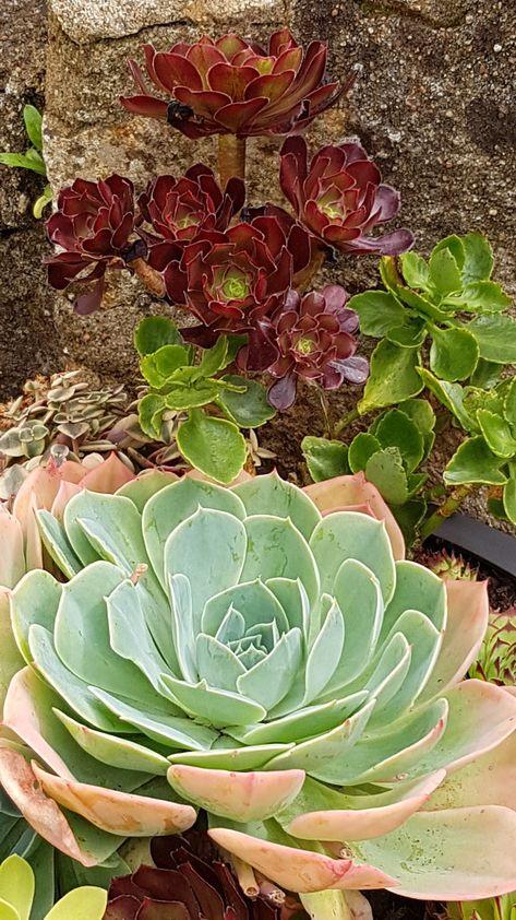 Plante Grasse Realiser Une Composition De Succulentes Com