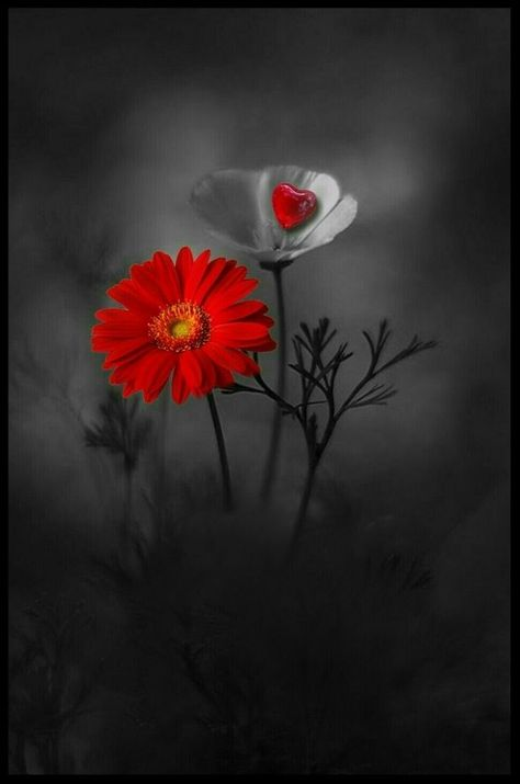 Color splash flowers / red  #color  # flowers # color # color splash