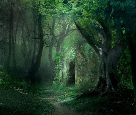 Beautiful Forest Portal, The Enchanted Wood