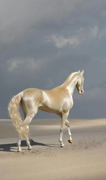 ausmalbilder pferde longieren  catherine miller grundschule