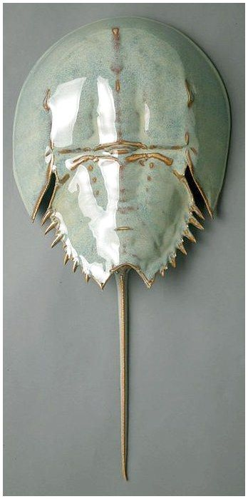Horseshoe Crab Sculpture Contemporarypottery Potterydesign Pottery Ceramic Click For More Info Crab Art Horseshoe Crab Ceramic Sculpture