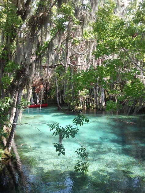 Three Sisters Springs Been There Going Again Places In Florida Florida Springs Florida Travel
