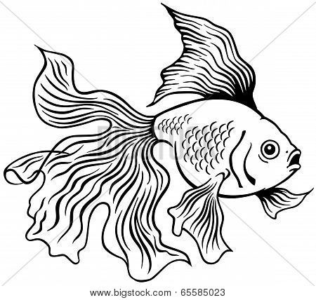Goldfish Or Golden Fish Black And White Side View Outline Image Poster Id 65585023 Fish Drawings Fish Painting Watercolor Fish