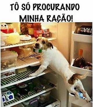 O que você está fazendo nessa geladeira rabito? tô…