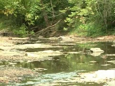 The anatomy of a stream is a complex subject that affects the entire community now and in the future. Learn more from local experts. A video by the City of Columbia Stormwater Education Program.