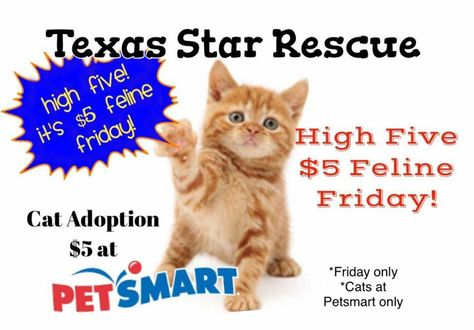 5 Feline Friday On Friday June 26 All Of The Current Cats At