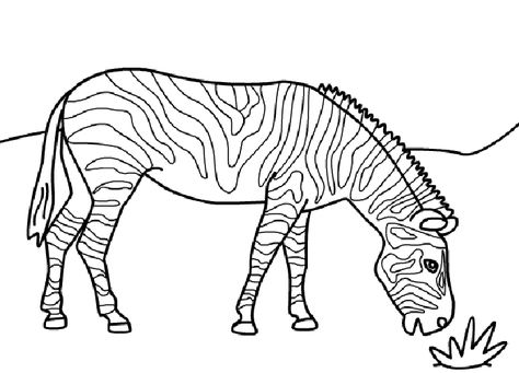 Free Printable Zebra Coloring Pages For Kids   fun friday ideas.