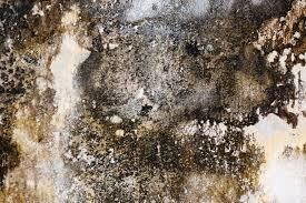 The Invisible Dangers Of Mold Mold Prevention Mold Allergy