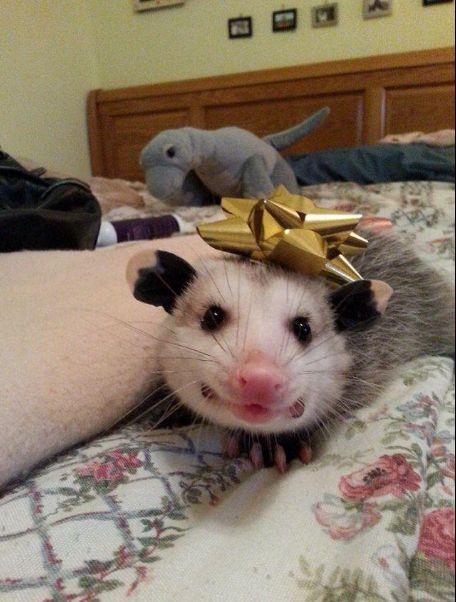 When you forgot to get your S.O. a Valentine's day gift and need to improvise quickly. | 19 Pictures Of Possums That Are Strangely Relatable