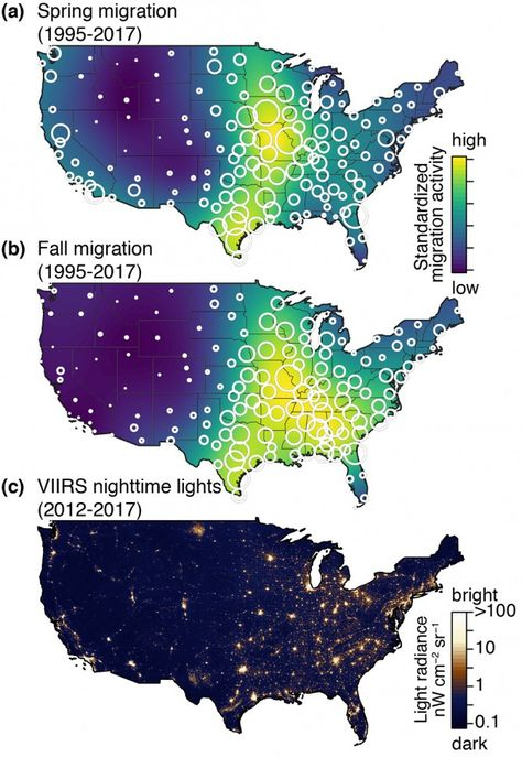 Chicago Tops List Of Most Dangerous Cities For Migrating Birds Bird Migration Birds Ornithology