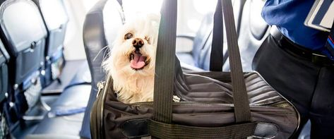 Air France Pet Travel Policy Pet Travel Flying With Pets Dogs