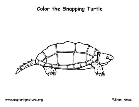 Turtle Snapping Coloring Page Snapping turtle Preschool