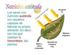 Resultado De Imagen Para Nutricion Autotrofa Herbs Parsley Conceptual