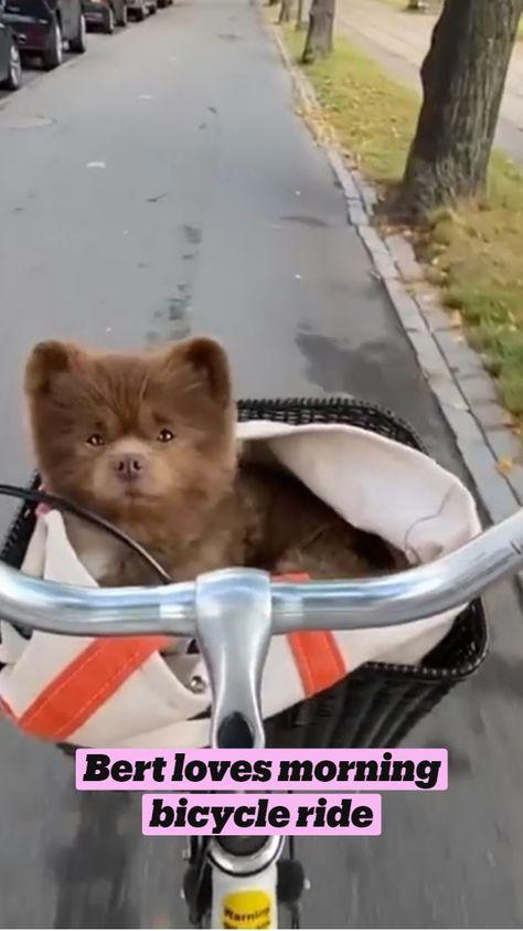 Bert loves morning bicycle ride