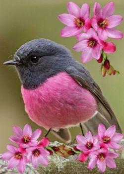 Beautiful Birds Blooms Series Rose Robin 117 Pieces Beautiful Birds Most Beautiful Birds Colorful Birds