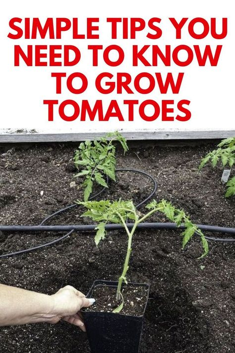 Do you garden or have a veggie garden? Or are you new to gardening and are looking for some helpful tips?