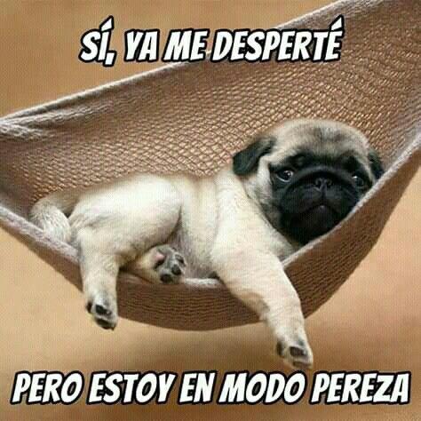 Pin De Iissette Rodriguez En Buenos Dias Crias De Pug Perros Pug Vida Pug