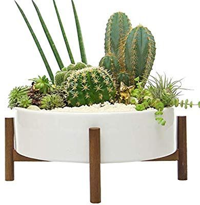 Mid Century Large Round Succulent Planter Bowl 10 Inch White Ceramic Pot With Wood Stand Succulen White Ceramic Planter Succulent Planter Indoor Plant Pots