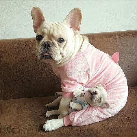 French Bulldog Mom And Puppy With Images French Bulldog