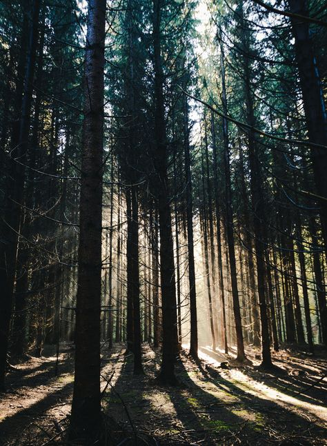 Lighting the Forest - A beautiful ray of light penetrates the darkness of the…