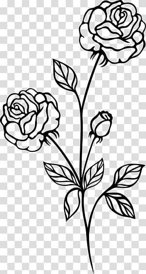 Black Rose Black And White Botanical Flowers Transparent Background Png Clipar Background Black Botanical Clipar Flowers Png Rose Di 2020 Bunga Mawar Hitam