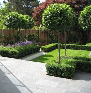 Formal Box Hedges Standard Trees With Lavender 1930 S Back