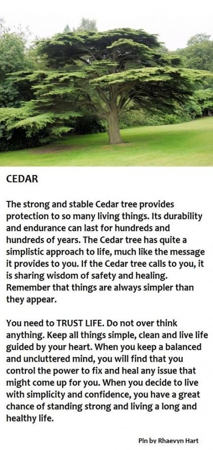 52+ Ideas Cedar Tree Tattoo Lebanon #tattoo #tree