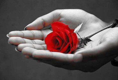 Rosas En Mano