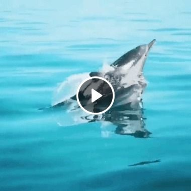 Synchronized dolphin jump out of the water | GIF Video