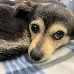 Watauga Humane Society In Boone North Carolina In 2020 With Images Pet Adoption Mixed Breed Dog Adoption