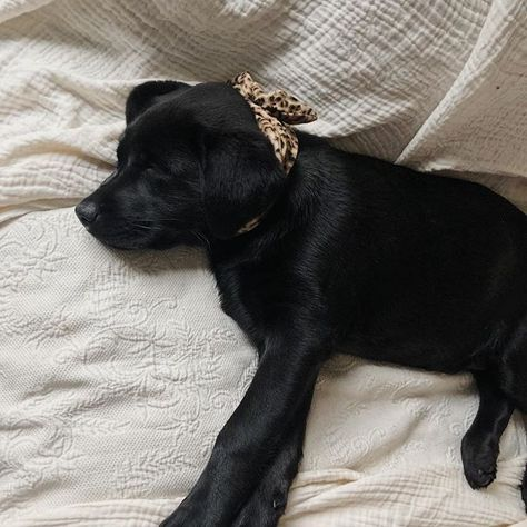 Kendraalexandra On Instagram With Images Animals Black Lab Pup