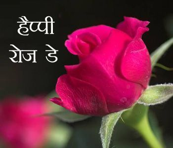Happy Rose Day Shayari In Hindi 7th Feb Wishes 7th Day Feb Happy Hindi Ros 7th Day Feb Happy Hindi Ros Rose In 2020 Rose Day Shayari Planting Roses Rose