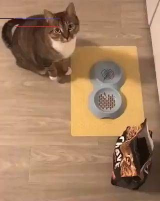 You see, the bowl is empty.😯 Here should be some cat food😬😬 You see, the bowl is empty.😯 Hurry up , here should be some cat food😬😬  · · #cat #cats #love #lovelycats #lovely #cute #cutecats #cutecats #mycats #cats_today #cats_of_world #catlovers #catsofinstagram #cats_of_instagram #catlovers #catloversclub<br> Petplus Cat Groomer Simulation Cat Tongue Massage Comb Portable Pet Daily Hair Cleaning Care Tool The perfect touching for your cats. Made of ABS material, it is soft, environmentall