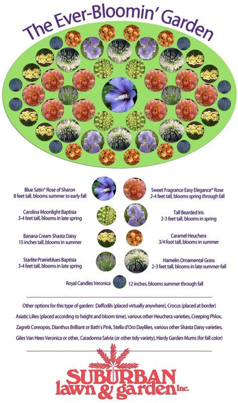 Potentilla Goldfinger Zone 5 Full Sun Backdrop Plants Pinterest Shrubs  Flowering Shrubs And Plants